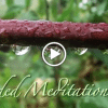 Calm In Any Situation Meditation Video Image
